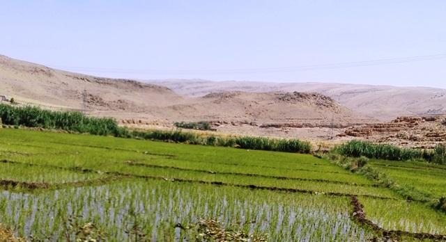 Risultati immagini per کشت برنج در کرمانشاه