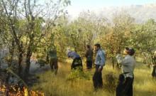حریق در جنگلهای قلاجه و کچل در گیلانغرب  پایان  گرفت